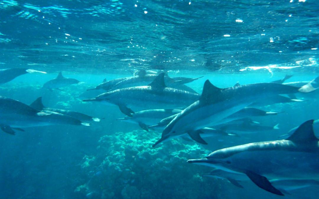Delfinschwimmen – Die Erfüllung eines Traumes in Freiheit