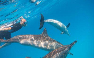 Respektvolles Schwimmen mit Delfinen