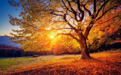 Mein Weg zum Beckenboden-Yoga: Spirituelle Erdung