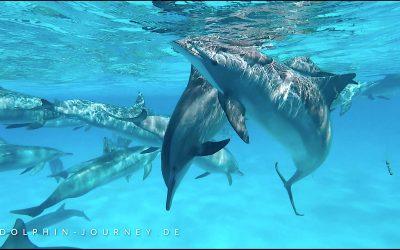 Was du von den Delfinen lernen kannst…
