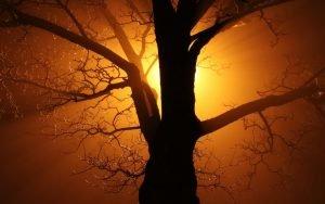 So tief in die Erde wie ein Baum
