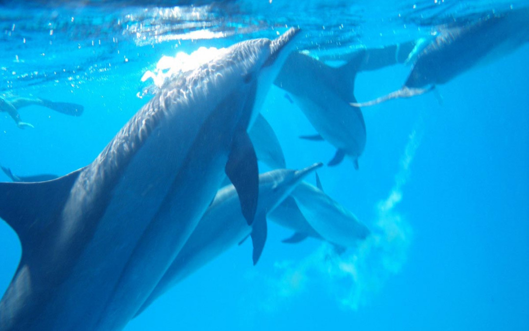 Traumgestaltung: Vom Delfin-Traum zur Traumreise